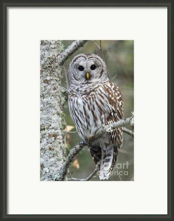 Hoot Hoot Hoot Are You Framed Print By Reflective Moments  Photography And Digital Art Images