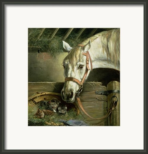 Horse And Kittens Framed Print By Moritz Muller