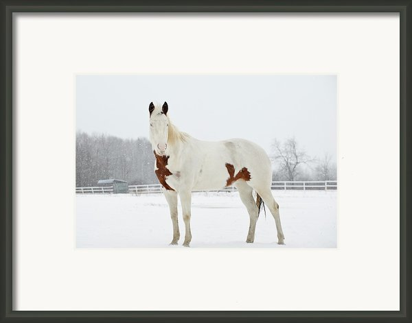 Horse In Snow Framed Print By Jesse James Photography