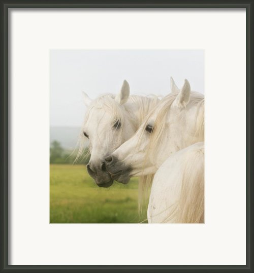 Horse Kiss Framed Print By El Luwanaya Arabians