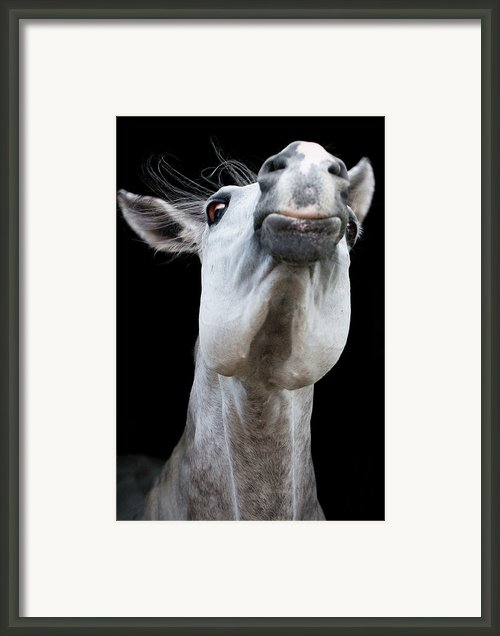 Horse Pulling Face Framed Print By Peter Meade