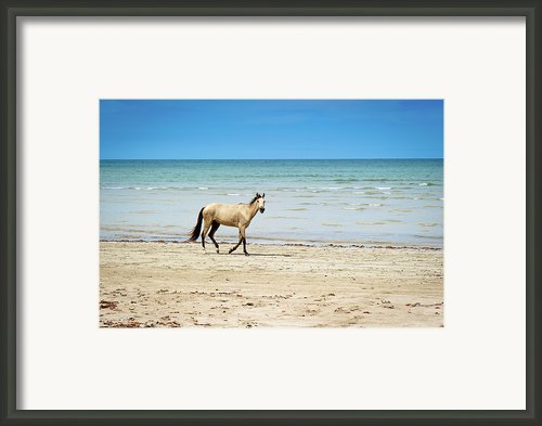 Horse Walking On Beach Framed Print By Vitor Groba