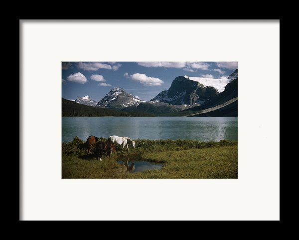 Horses Graze In A Lakeside Meadow Framed Print By Walter Meayers Edwards