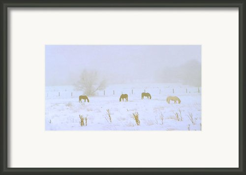 Horses Grazing In A Field Of Snow And Fog Framed Print By Steve Ohlsen