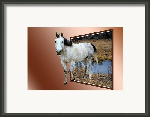 Horsing Around Framed Print By Shane Bechler