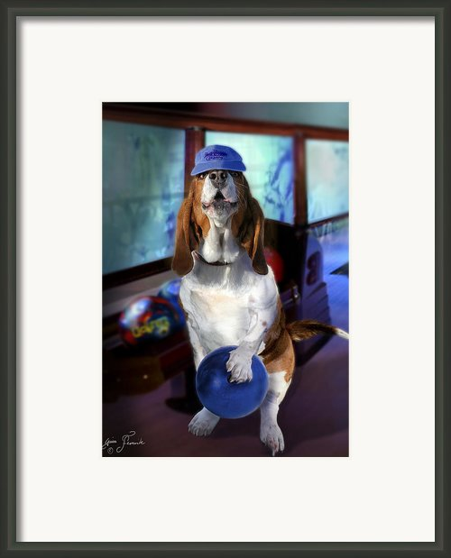 Hound Dog Bowling Framed Print By Gina Femrite