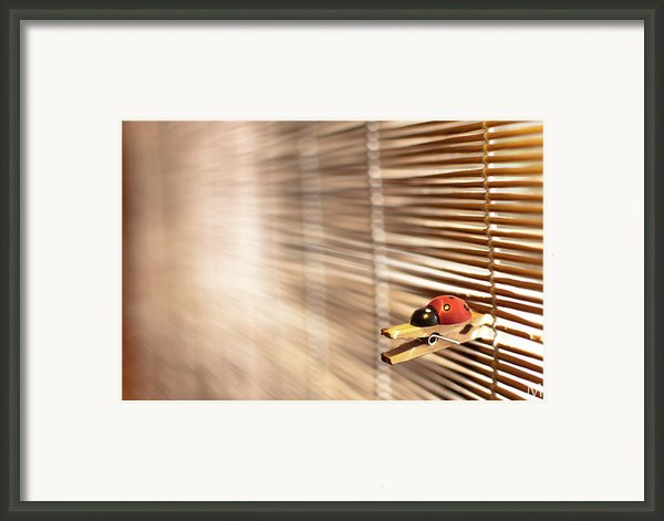 House Of The Rising Ladybug Framed Print By Máté Makarész