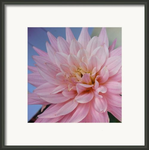 How Are You Framed Print By Chan K H