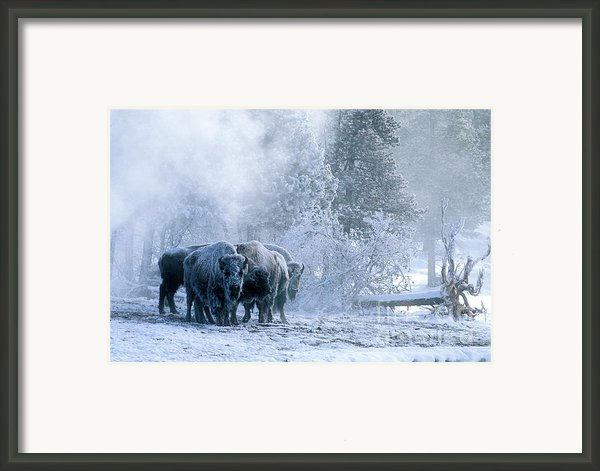 Huddled For Warmth Framed Print By Sandra Bronstein