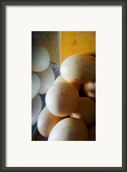 Huevo Framed Print By Skip Hunt