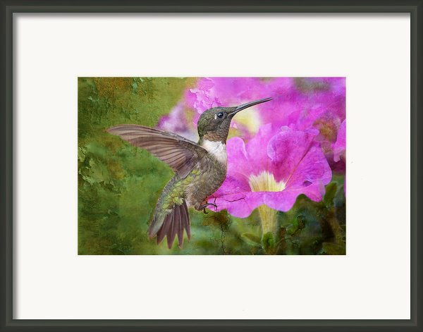 Hummingbird And Petunias Framed Print By Bonnie Barry