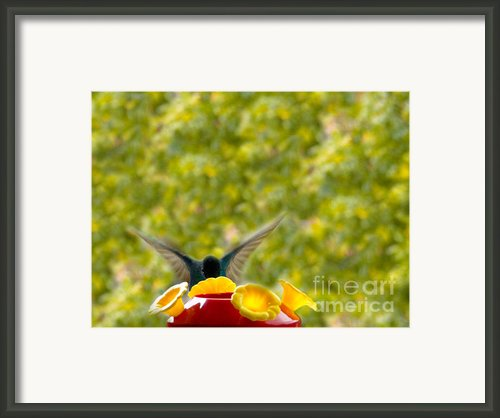 Hummingbird Series 3 Framed Print By Al Bourassa
