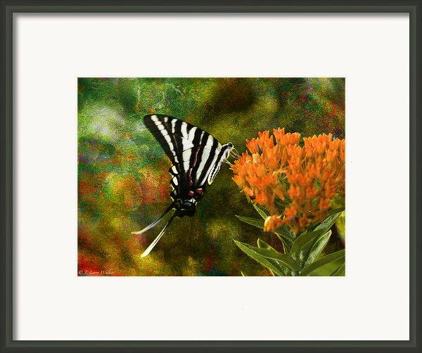 Hungry Little Butterfly Framed Print By J Larry Walker