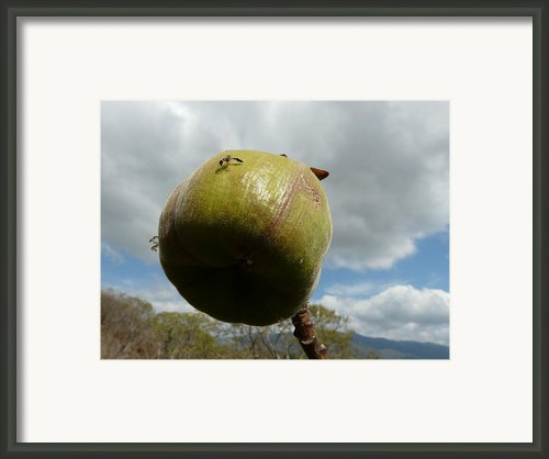 Hymenoptera Framed Print By Juan Francisco Zeledon