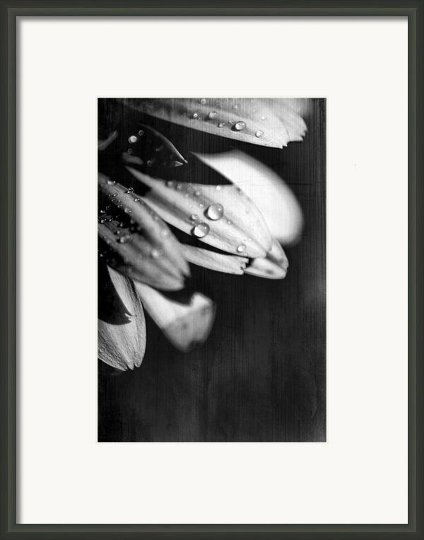 I Am Barely Breathing Framed Print By Laurie Search