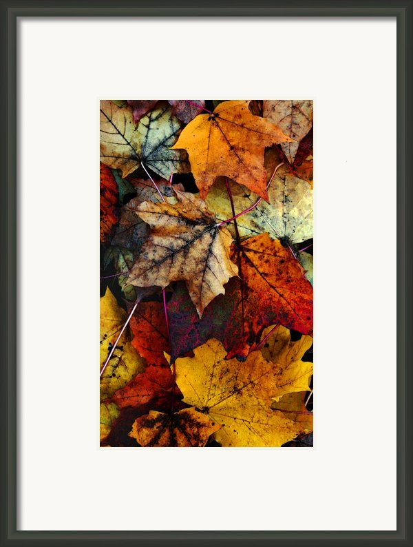 I Love Fall 2 Framed Print By Joanne Coyle