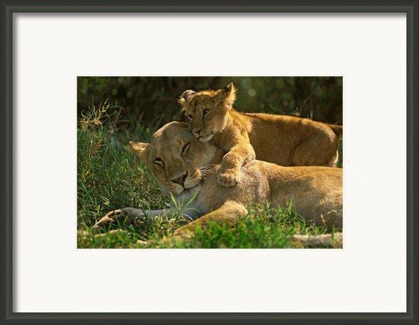 I Love My Mother Framed Print By Johan Elzenga