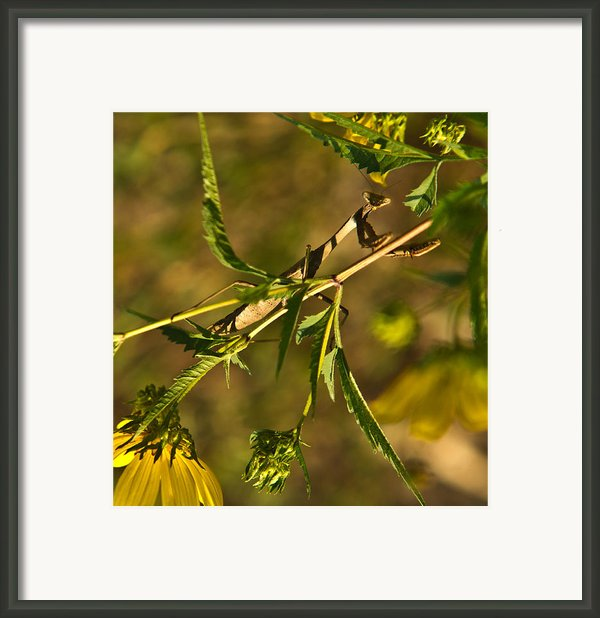 I See You And You Are Mine Framed Print By Douglas Barnett