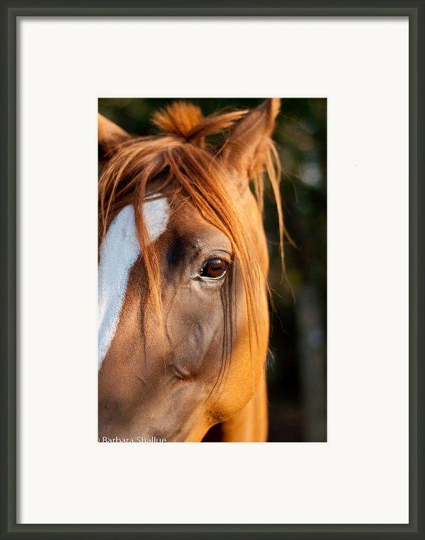 I See You Framed Print By Barbara Shallue