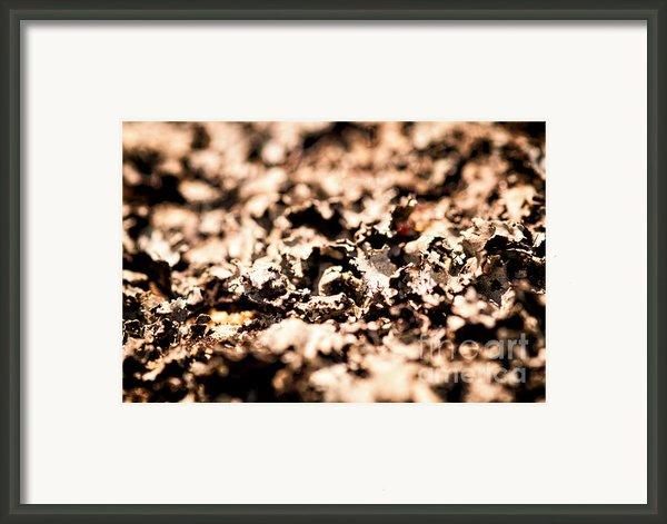 I Shall Imagine Life Framed Print By Venura Herath