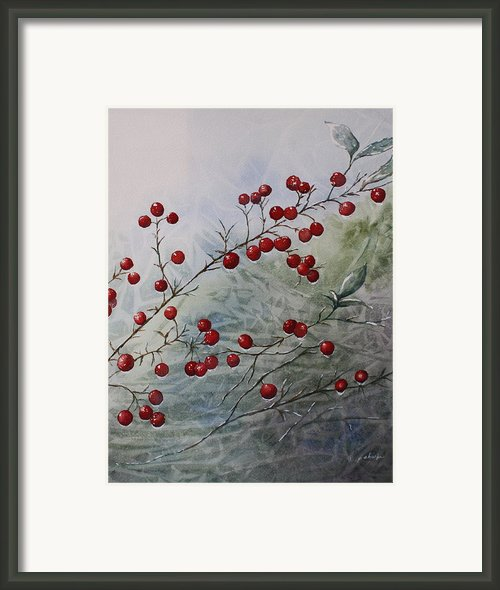 Iced Holly Framed Print By Patsy Sharpe