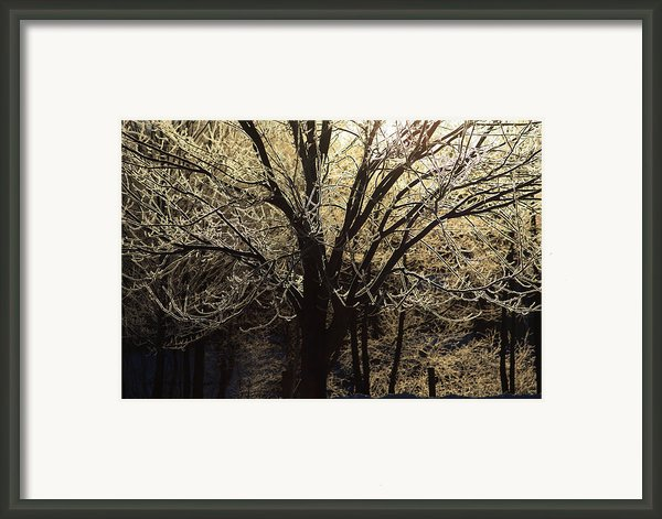 Iced Framed Print By Karol  Livote