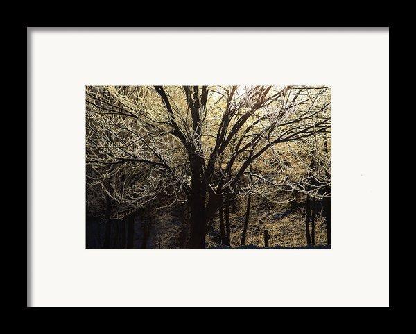 Iced Framed Print By Karol  Livote