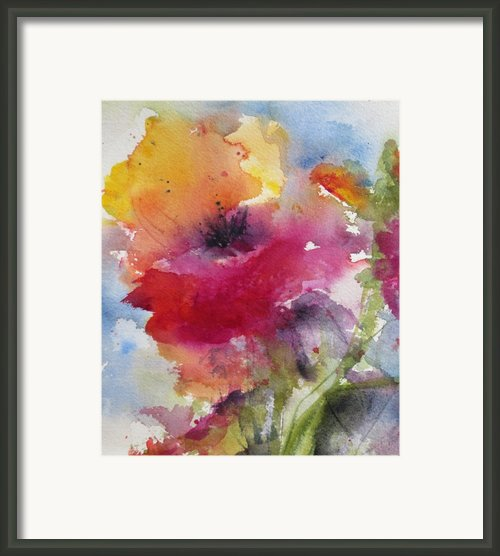 Iceland Poppy Framed Print By Anne Duke