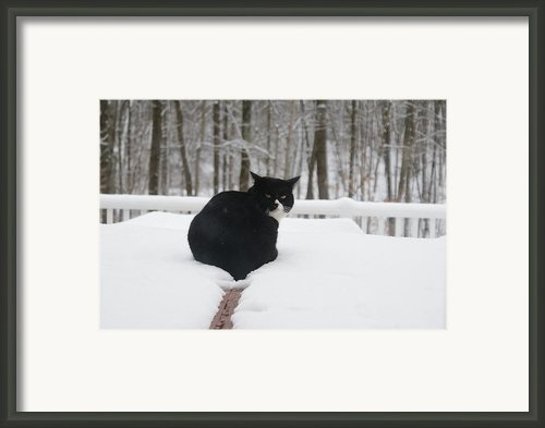 If Looks Could Kill Framed Print By Lynda Dawson-youngclaus