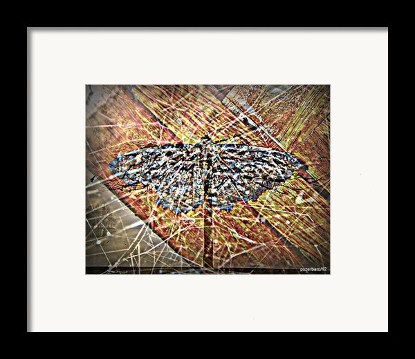 Illusory Appearances Framed Print By Paulo Zerbato