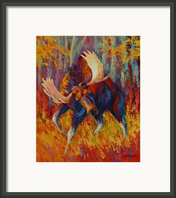 Imminent Charge - Bull Moose Framed Print By Marion Rose