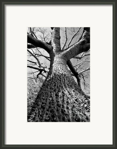 Impressive Framed Print By David Lee Thompson