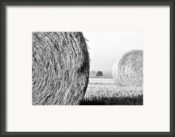 In The Hay -black And White Framed Print By Dana Walton