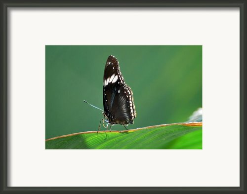 In The Limelight Framed Print By Teresa Blanton