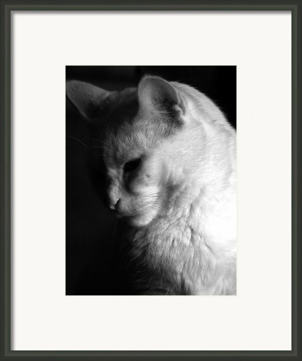 In The Shadows Framed Print By Bob Orsillo