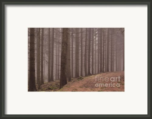 In The Woods I Framed Print By Iris Lehnhardt