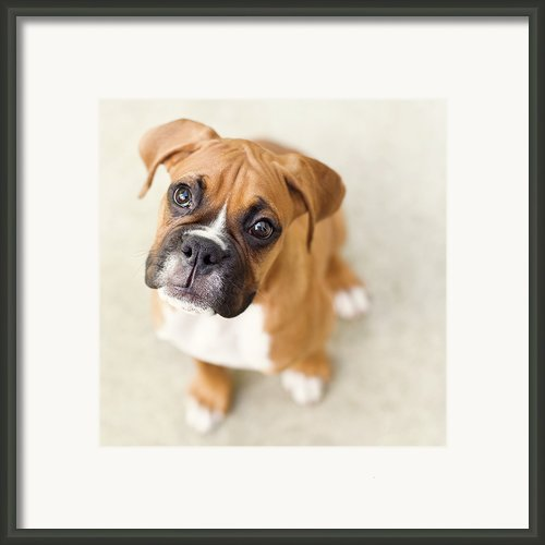 Innocence Framed Print By Jody Trappe Photography