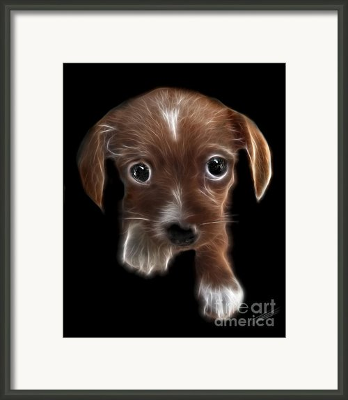 Innocent Loving Eyes	 Framed Print By Peter Piatt