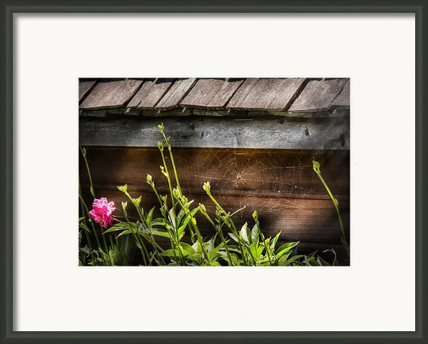 Insect - Spider - Charlottes Web Framed Print By Mike Savad