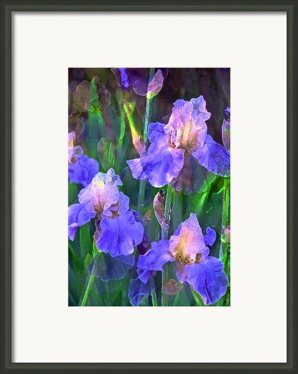 Iris 51 Framed Print By Pamela Cooper
