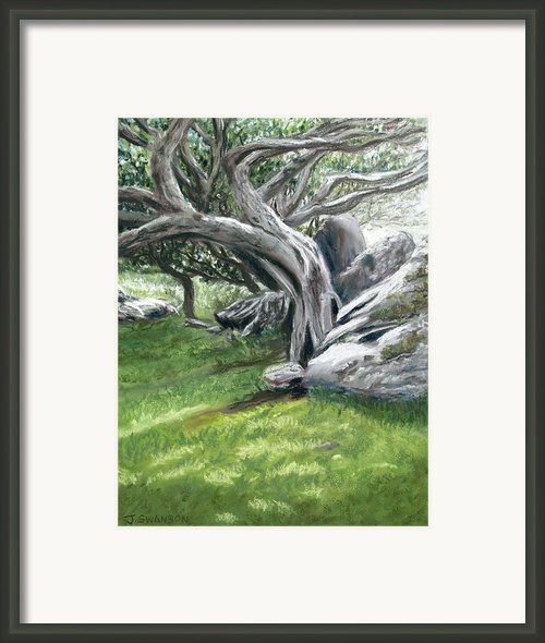Irish Tree Ring Of Kerry Framed Print By Joan Swanson