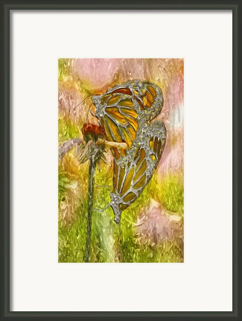 Iron Butterflys Framed Print By Jack Zulli