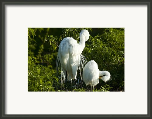 Is This How Framed Print By Carolyn Marshall