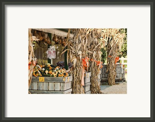 Isoms Orchard In Fall Regalia Framed Print By Kathy Clark
