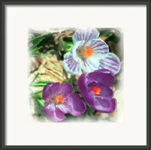 Ist Flowers In The Garden 2010 Framed Print By David Lane