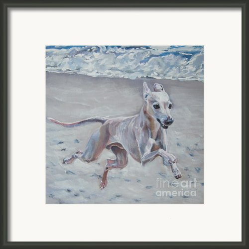Italian Greyhound On The Beach Framed Print By Lee Ann Shepard