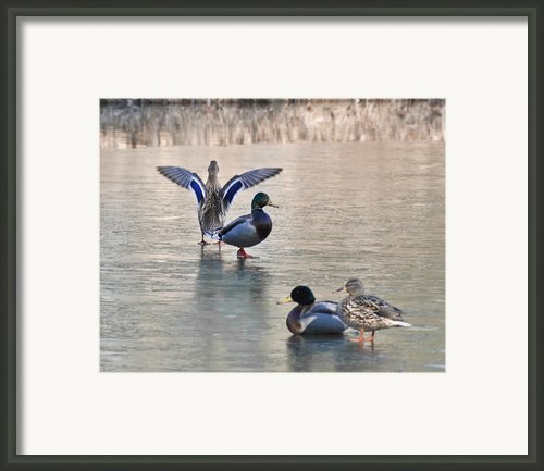 Its Hard To Lead When No One Will Follow Framed Print By Leeann Mclanegoetz Mclanegoetzstudiollccom
