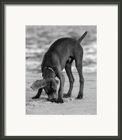 Its My Clam Framed Print By Angie Mckenzie