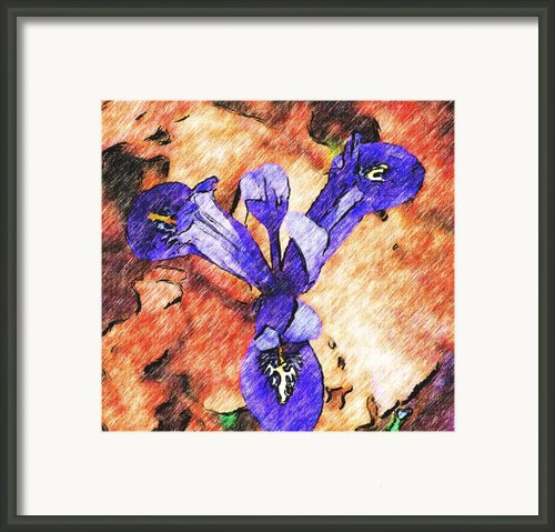 Its Spring 2010a  Framed Print By David Lane