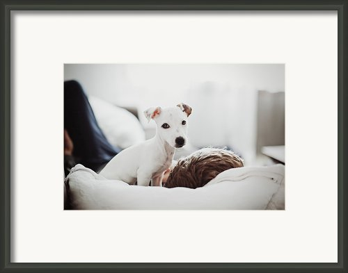 Jack Russell Terrier Puppy With His Owner Framed Print By Lifestyle Photographer